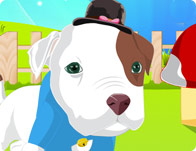 Baby Pitbull Dress Up