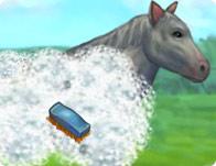 My Pet Horse
