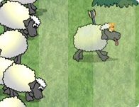 Sheep Reaction Test
